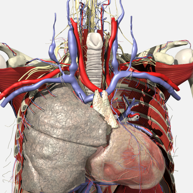 3D Real-time Anatomy | Human Anatomy | Primal Pictures
