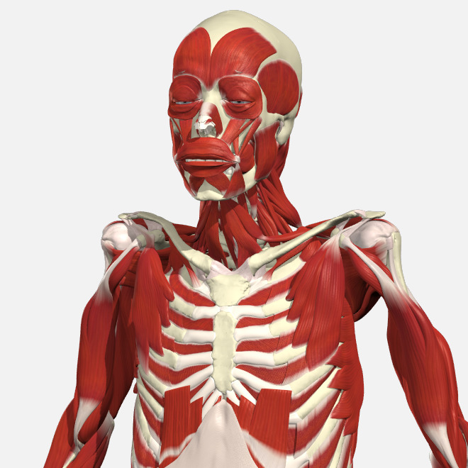 PHYSIOPEDIA – Functional Anatomy – 12 Months
